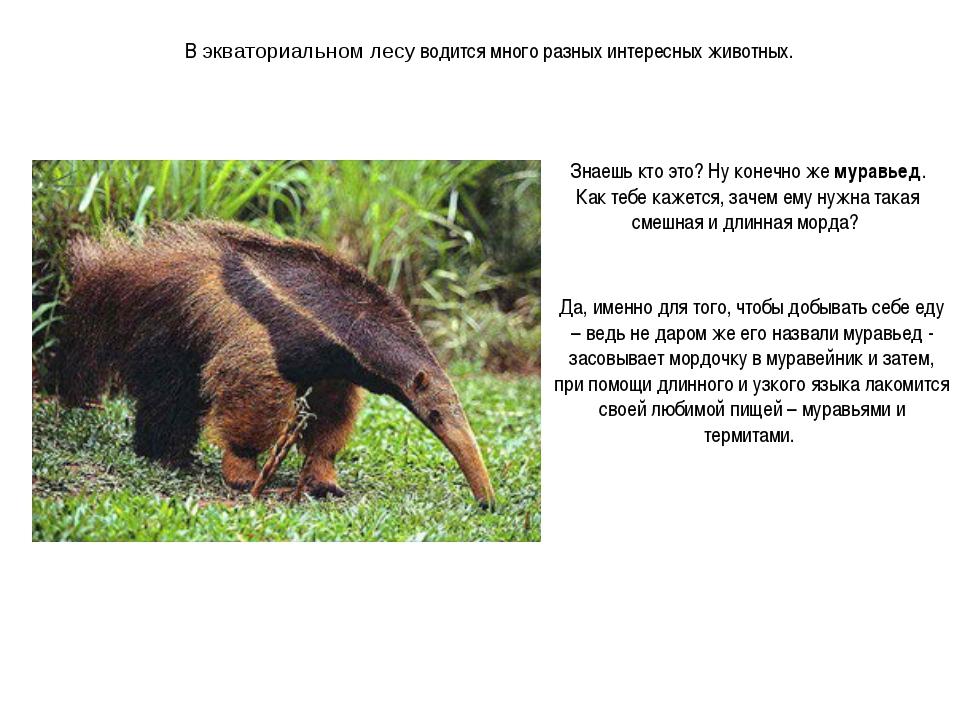 В экваториальном лесу водится много разных интересных животных. Знаешь кто эт...