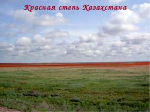 Красная степь Казахстана