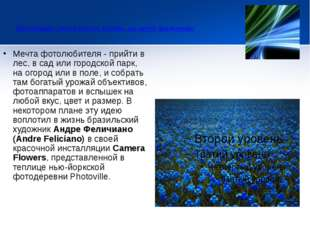 Инсталляция Camera Flowers. Клумбы, где цветут фотокамеры  Мечта фотолюби