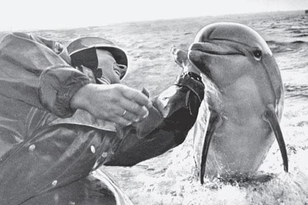 Животные, состоявшие на военной службе в России. . - Деловой…