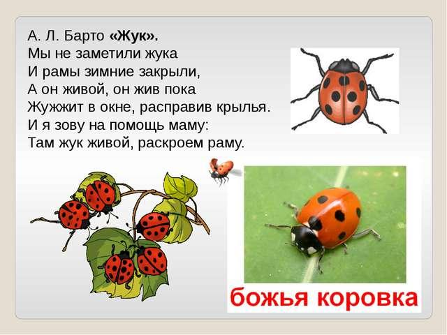 А. Л. Барто «Жук». Мы не заметили жука И рамы зимние закрыли, А он живой, он...