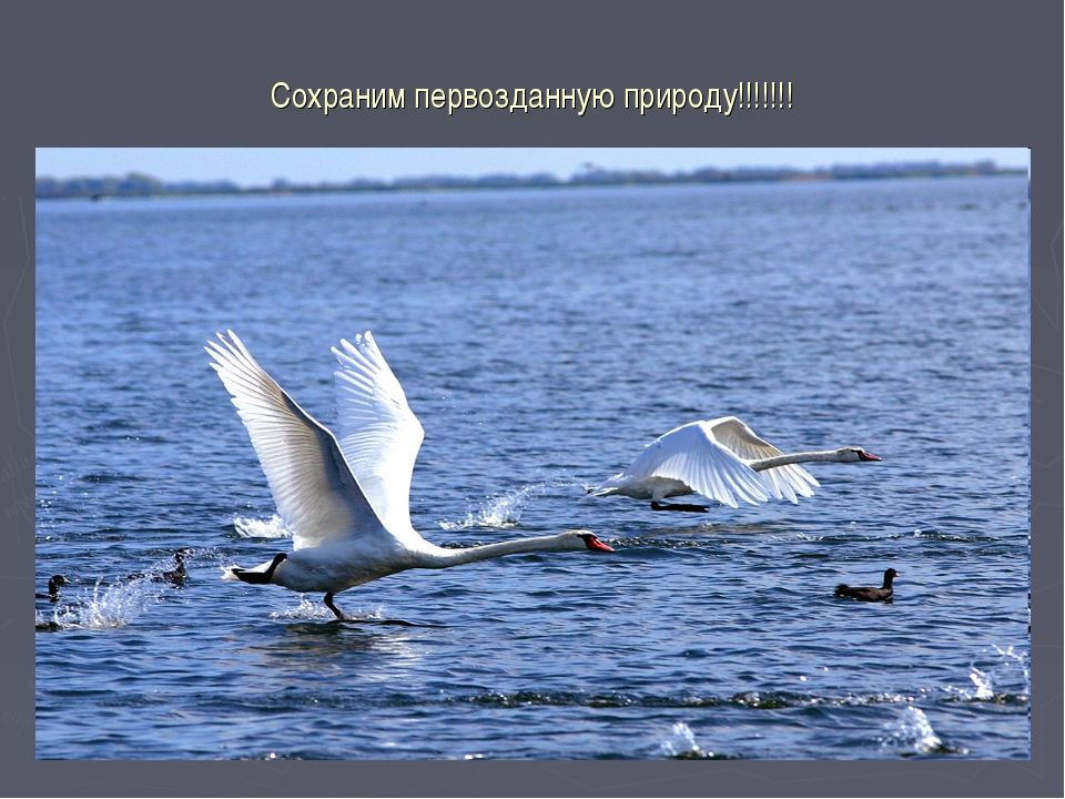 Сохраним первозданную природу!!!!!!!