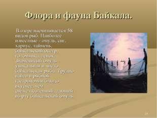 * Флора и фауна Байкала. В озере насчитывается 58 видов рыб. Наиболее известн