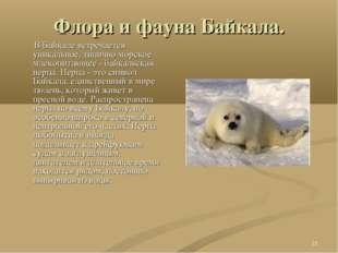 * Флора и фауна Байкала. В Байкале встречается уникальное, типично морское мл
