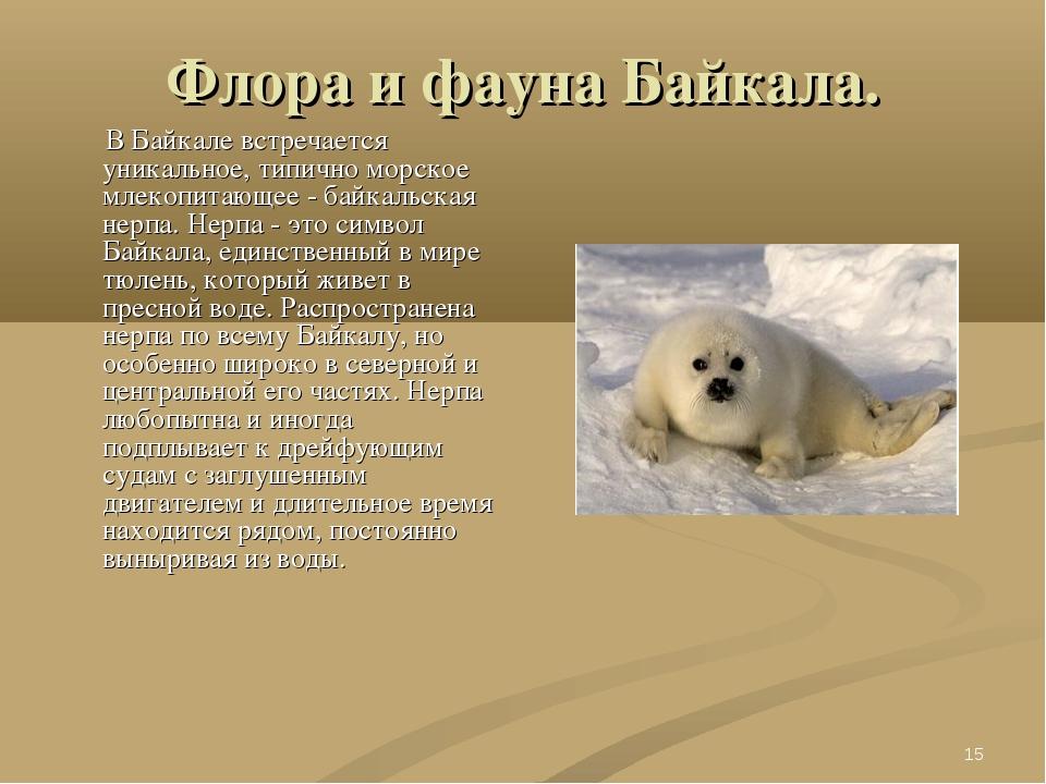 * Флора и фауна Байкала. В Байкале встречается уникальное, типично морское мл...
