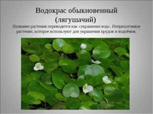 Водокрас обыкновенный (лягушачий) Название растения переводится как «украшени