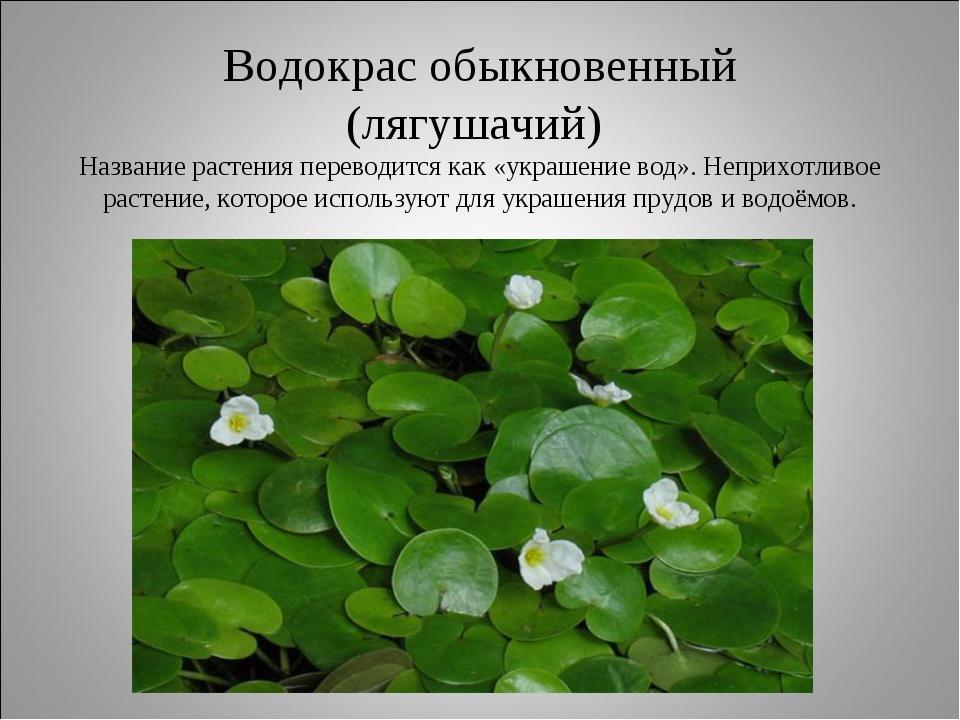 Водокрас обыкновенный (лягушачий) Название растения переводится как «украшени...