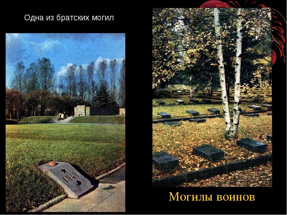Одна из братских могил Могилы воинов http://www.deti-66.ru/ Всероссийский инт...