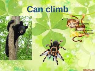 Can climb
