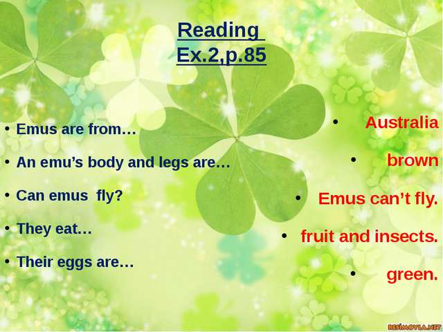 Reading Ex.2,p.85 Emus are from… An emu's body and legs are… Can emus fly? Th...