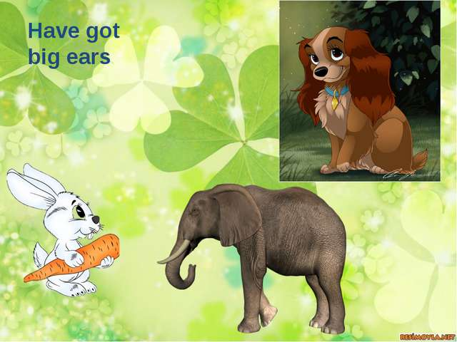 Have got big ears