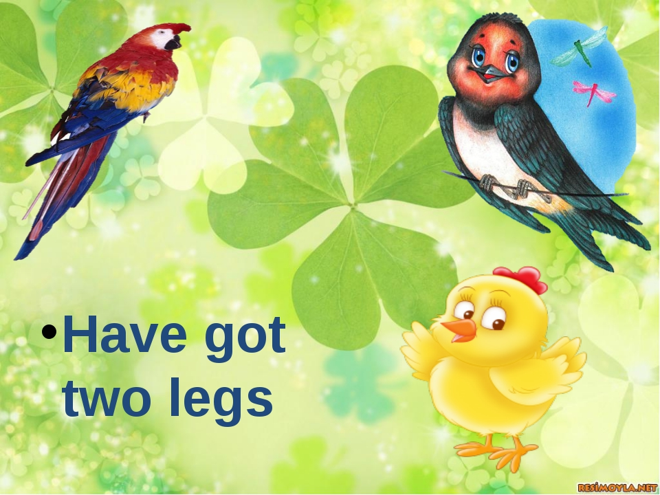 Have got two legs