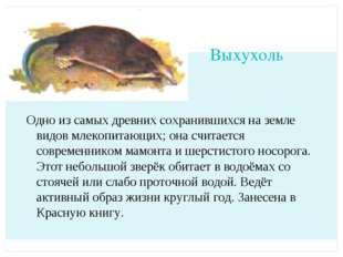 Выхухоль Одно из самых древних сохранившихся на земле видов млекопитающих; он
