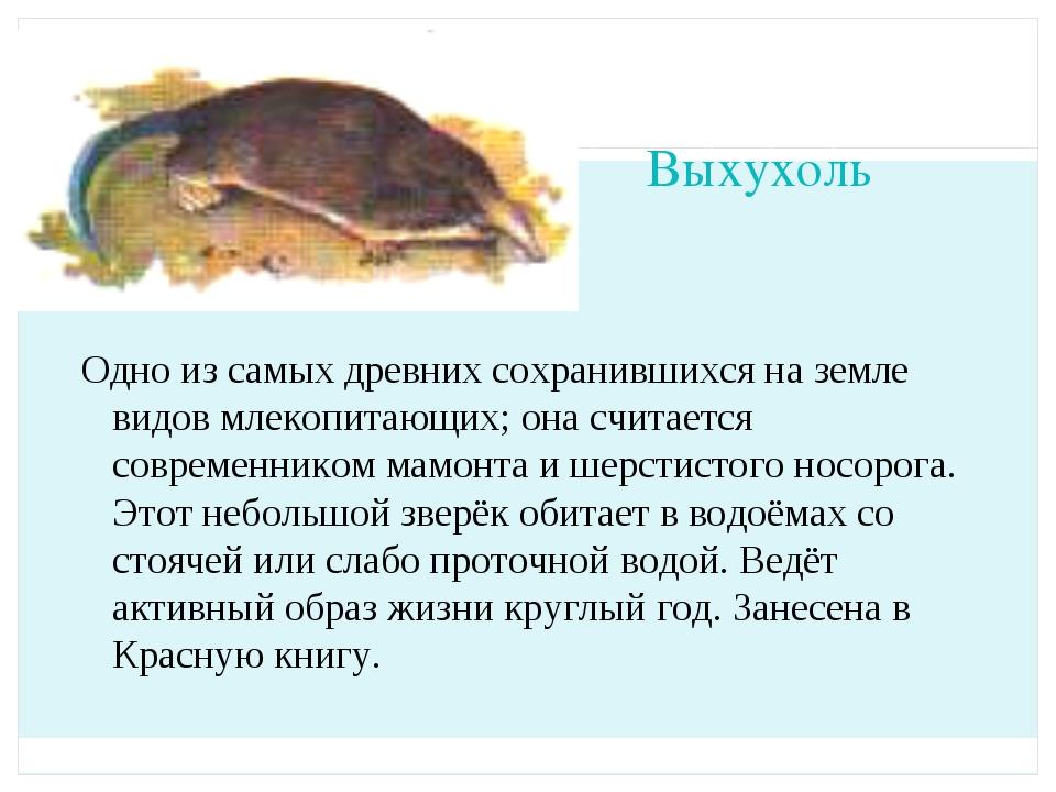 Выхухоль Одно из самых древних сохранившихся на земле видов млекопитающих; он...