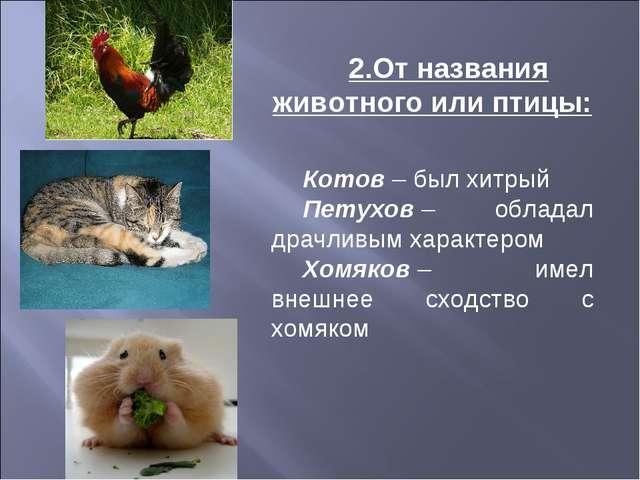 2.От названия животного или птицы: Котов– был хитрый Петухов– обладал драчл...