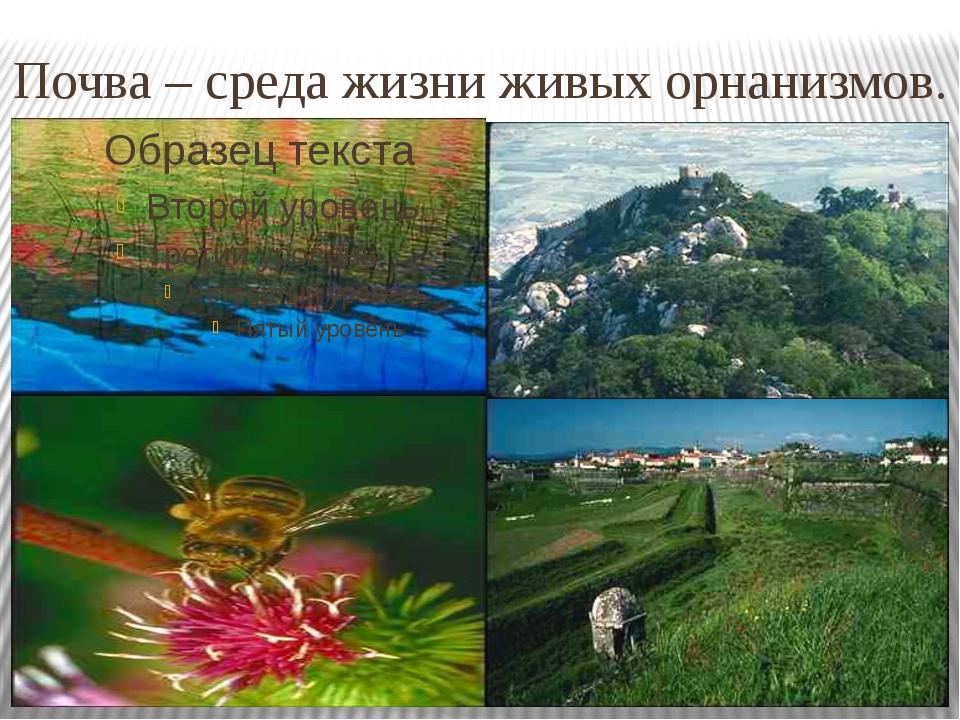 Почва – среда жизни живых орнанизмов.