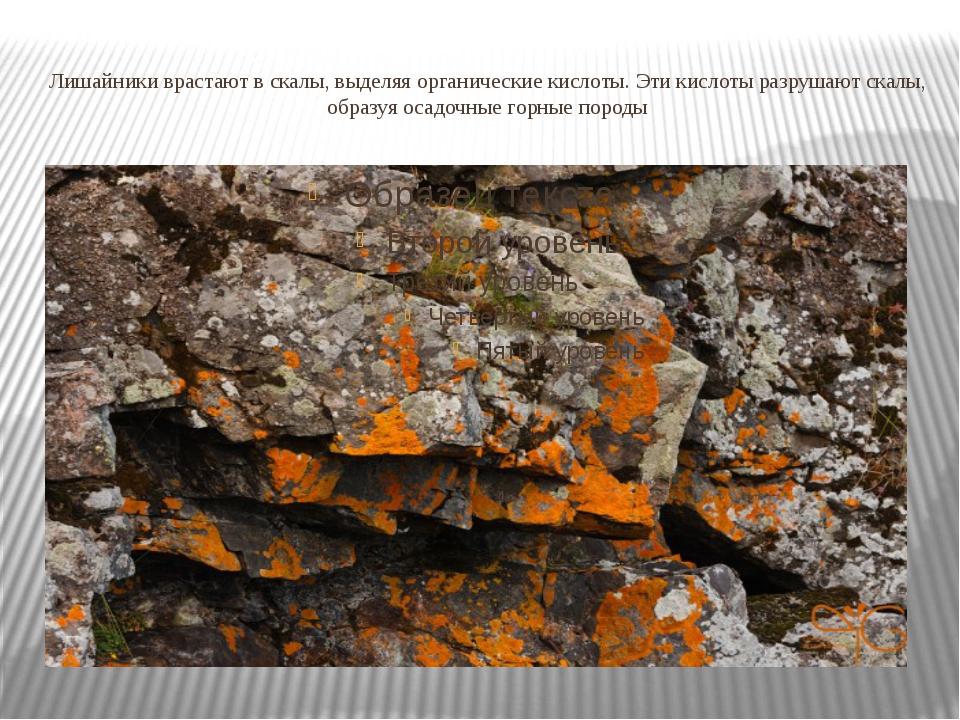 Лишайники врастают в скалы, выделяя органические кислоты. Эти кислоты разруша...