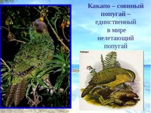 Гаттерия – самое древнее пресмыкающееся (представители этого рода жили на Зем