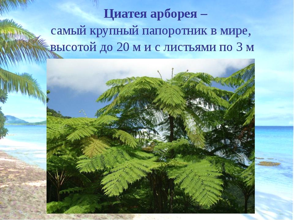 Киви – птица, имеющая самые маленькие (выродившиеся) крылья Вес до 4 кг. Сил...