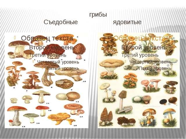 грибы Съедобные ядовитые