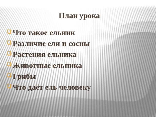План урока Что такое ельник Различие ели и сосны Растения ельника Животные ел...