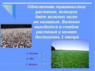 Однолетнее травянистое растение, которое даёт волокно того же названия. Волок