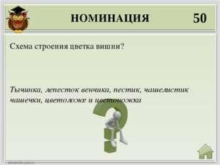 НОМИНАЦИЯ 50 Тычинка, лепесток венчика, пестик, чашелистик чашечки, цветоложе