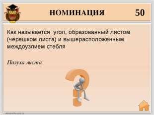 НОМИНАЦИЯ 50 Пазуха листа Как называется угол, образованный листом (черешком