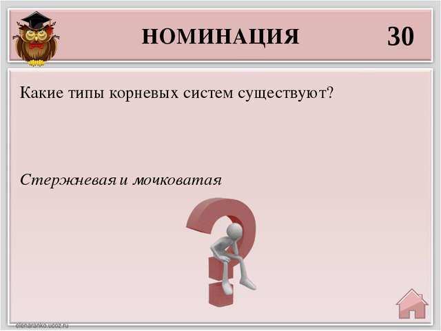 НОМИНАЦИЯ 30 Стержневая и мочковатая Какие типы корневых систем существуют?