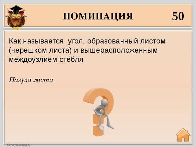 НОМИНАЦИЯ 50 Пазуха листа Как называется угол, образованный листом (черешком...