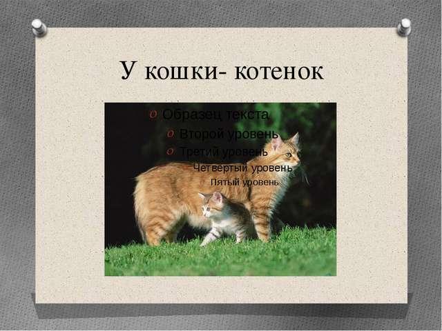 У кошки- котенок