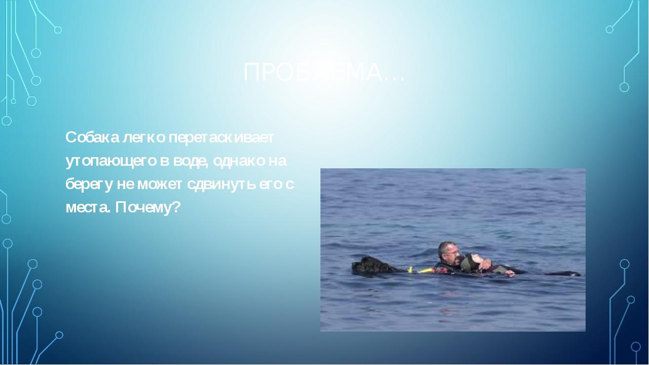 ПРОБЛЕМА… Собака легко перетаскивает утопающего в воде, однако на берегу не м...