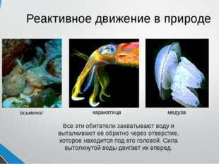 Реактивное движение в природе осьминог каракатица медуза Все эти обитатели за