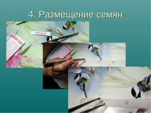 4. Размещение семян