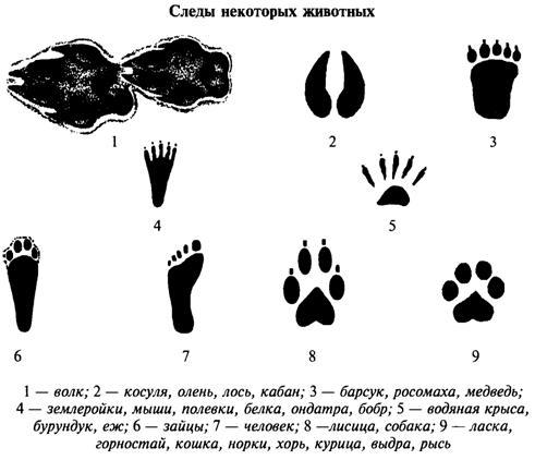 Чей это след. (Страница 2) - Общение - Корзина - PRICE-ALTAI.RU : Объявления - Барнаул