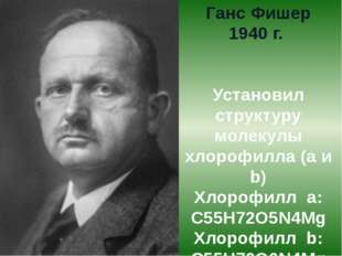 Ганс Фишер 1940 г. Установил структуру молекулы хлорофилла (а и b) Хлорофилл