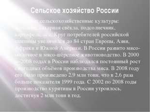 Сельское хозяйство России Основные сельскохозяйственные культуры: зерновые, с