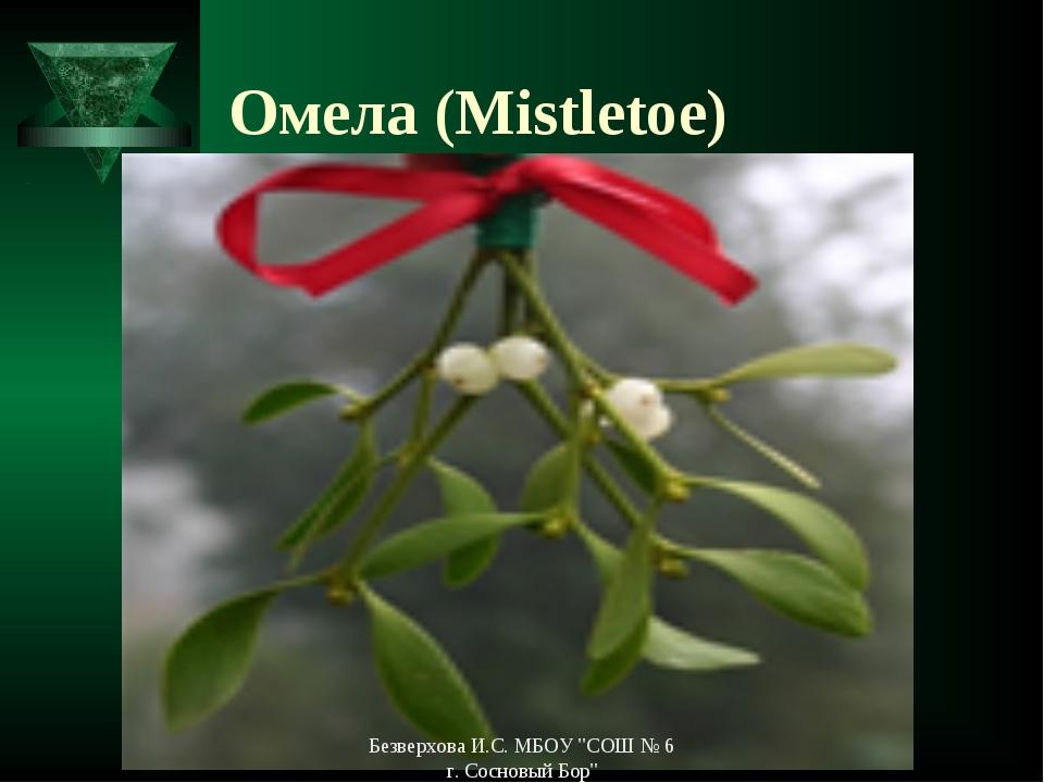 """Омела (Mistletoe) Безверхова И.С. МБОУ """"СОШ № 6 г. Сосновый Бор"""" Безверхова И..."""