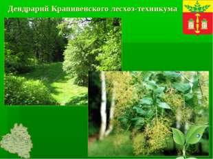 Дендрарий Крапивенского лесхоз-техникума