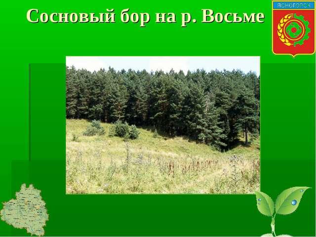 Сосновый бор на р. Восьме