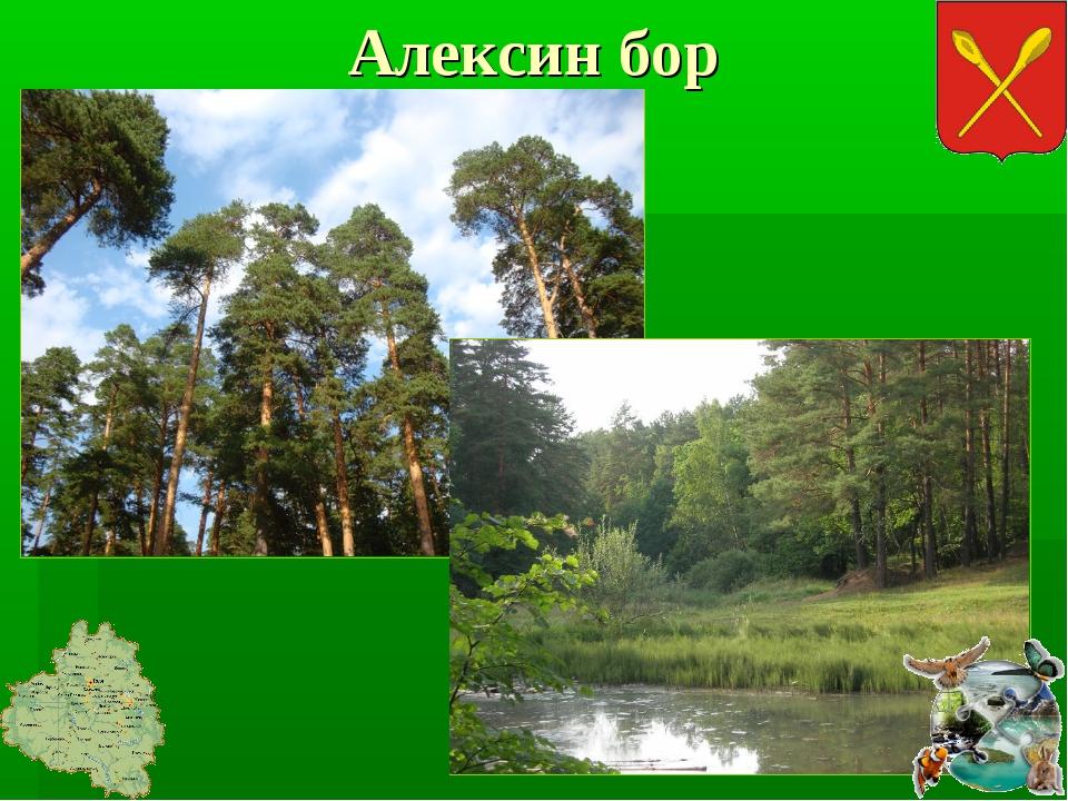 Алексин бор