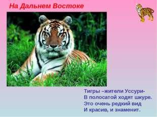 На Дальнем Востоке Тигры –жители Уссури- В полосатой ходят шкуре. Это очень р