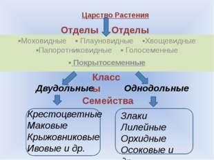 Ответьте на вопросы. Что такое систематика? Кто является автором систематики?