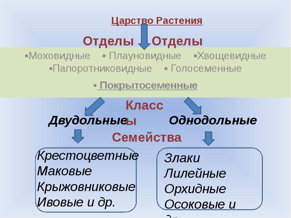 Ответьте на вопросы. Что такое систематика? Кто является автором систематики?...