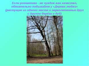 Если романтика - не чуждое вам качество, обязательно побывайте у «Дерева любв