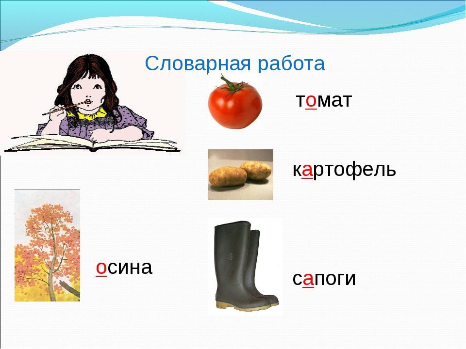 Словарная работа осина томат картофель сапоги