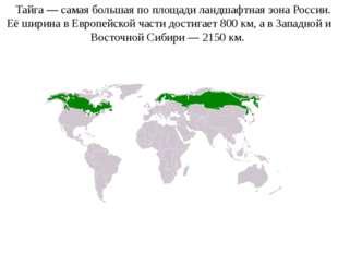Тайга— самая большая по площади ландшафтная зонаРоссии. Её ширина в Европе
