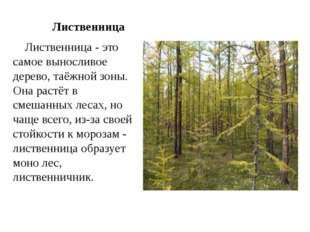 Лиственница Лиственница - это самое выносливое дерево, таёжной зоны. Она рас