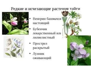 Редкие и исчезающие растения тайги Венерин башмачок настоящий Бубенчик лекарс