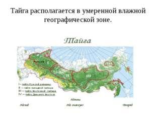 Тайга располагается в умеренной влажной географической зоне.